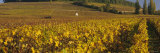 Vineyard on a Landscape, Bourgogne, France Photographic Print by  Panoramic Images