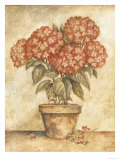 Hortensia rouge en pot Poster par Tina Chaden