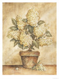 Potted White Hydrangea Posters by Tina Chaden