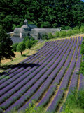 Senaque Abbey and Lavender Fields, Gordes, Provence, France Fotografie-Druck von Steve Vidler