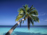 Tropical Beach at Maldives Photographic Print by Jon Arnold