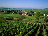 Village and Vineyards, Pernand Vergelesses, Burgundy, France Photographic Print by Steve Vidler