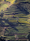 Terraced Hillside, Nepal Photographic Print by Jon Arnold