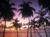 Pigeon Point, Tobago, Trinidad and Tobago Fotografie-Druck von Peter Adams