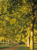 Avenue of Trees, Switzerland Photographic Print by Jon Arnold