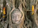 Wat Mahathat, Buddha Head, Ayutthaya, Thailand Photographic Print by Steve Vidler