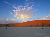 Red dunes and dead acacia tree, Dead Vlei, Namib-Naukluft-Sossusvlei, Namibia Photographic Print by Gavin Hellier