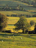 Cotswolds, England Photographic Print by Jon Arnold