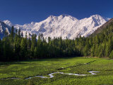 Nanga Parbat, from Fairy Meadows, Diamir District, Pakistan Photographic Print by Michele Falzone