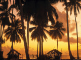 Palm Trees at Sunset, Zanzibar, Tanzania Photographic Print by Peter Adams