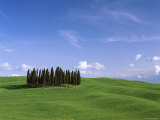 Val d'Orcia, Countryside View, Green Grass and Cypress Trees, Tuscany, Italy Photographic Print by Steve Vidler