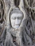 Buddha Head  Wat Phra Mahathat  Ayutthaya  Thailand