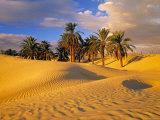 Sand Dunes and Oasis, Desert, Tunisia Fotografie-Druck von Peter Adams