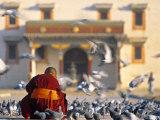 Gandan Khiid Monastery, Ulaan Baatar, Mongolia Photographic Print by Peter Adams