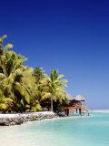 Palm Trees and Tropical Beach, Aitutaki Island, Cook Islands, Polynesia Photographie par Steve Vidler