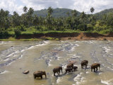 Pinnewala Elephant Orphanage Near Kegalle, Hill Country, Sri Lanka Photographic Print by Gavin Hellier