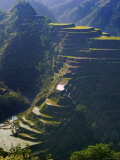 Rice Terraces of Banaue, Luzon Island, Philippines Photographic Print by Michele Falzone
