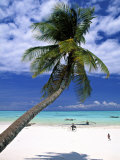 Palm Tree and Beach, Zanzibar, Tanzania Photographic Print by Peter Adams