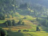 Alpine Meadow, Switzerland Photographic Print by Jon Arnold