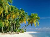 Palm Trees and Tropical Beach, Maldive Islands, Indian Ocean Fotoprint van Steve Vidler