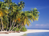 Tropical Beach and Palm Trees, Maldives, Indian Ocean Photographic Print by Danielle Gali