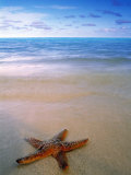 Starfish on Beach, Maldives Fotografie-Druck von Peter Adams