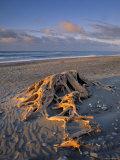 Gillespie's Beach, West Coast, South Island, New Zealand Photographic Print by Jon Arnold