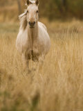 Horse, Montana, USA Photographic Print by Russell Young