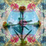 Carnation Cross Photographic Print by Alaya Gadeh