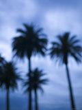 Ocean Avenue, Santa Monica, Los Angeles, California, USA Photographic Print by Walter Bibikow