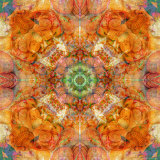 Colseaworld Mandala, no. 1 Photographic Print by Alaya Gadeh