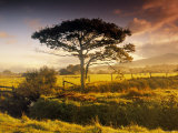 Landscape of Nr. Harlech, North Wales Photographic Print by Peter Adams
