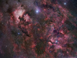 Northern Cygnus Photographic Print by  Stocktrek Images