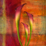 Three Pink Lilies Photographic Print by Robert Cattan