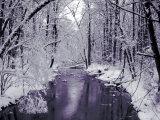 Jan Lakey - Snow Covered Trees along Creek in Winter Landscape - Fotografik Baskı