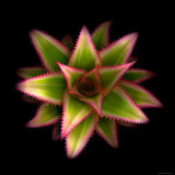 Cactus Star Photographic Print by Robert Cattan