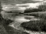 Reeds in Winter Photographic Print by Stephen Arens