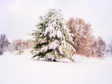 Snow Covered Trees in Winter Landscape Photographic Print by Jan Lakey