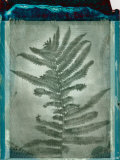 Negative Fern Leaves Photographic Print by Robert Cattan