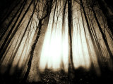 Sunlight Shining through Dense Forest Photographie par Jan Lakey