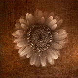 Sepia Gerbera Daisy Photographic Print by Robert Cattan