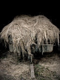 Hay Covered Wagon Photographic Print by Tim Kahane