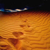 Lost in the Golden Sand Photographic Print by Mark James Gaylard