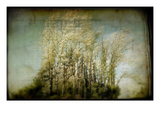 Grove of Trees Photographic Print by Mia Friedrich