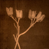 Four Dried Blossoms Photographic Print by Robert Cattan