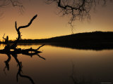 Gnarled Branches Poking out of Calm Lake Photographic Print by Jan Lakey