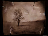Hanging Tree Photographic Print by Jack Germsheld