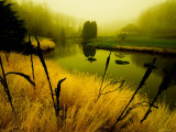 Golden Plant Growth along Peaceful River Photographic Print by Jan Lakey