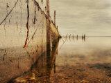 Nets Photographic Print by Irene Suchocki