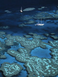 Great Barrier Reef, Queensland, Australia Photographic Print by Danielle Gali